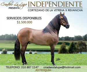 independiente 300x250