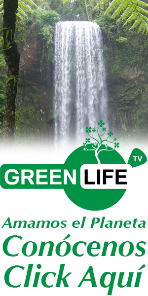 BANNER GREENLIFE 300X600