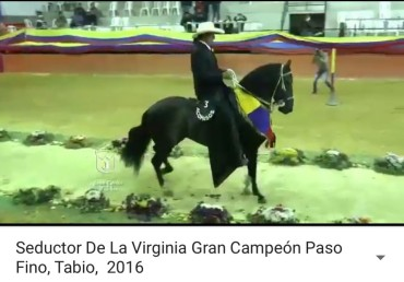 Seductor De La Virginia, GC Paso Fino, Tabio 2016