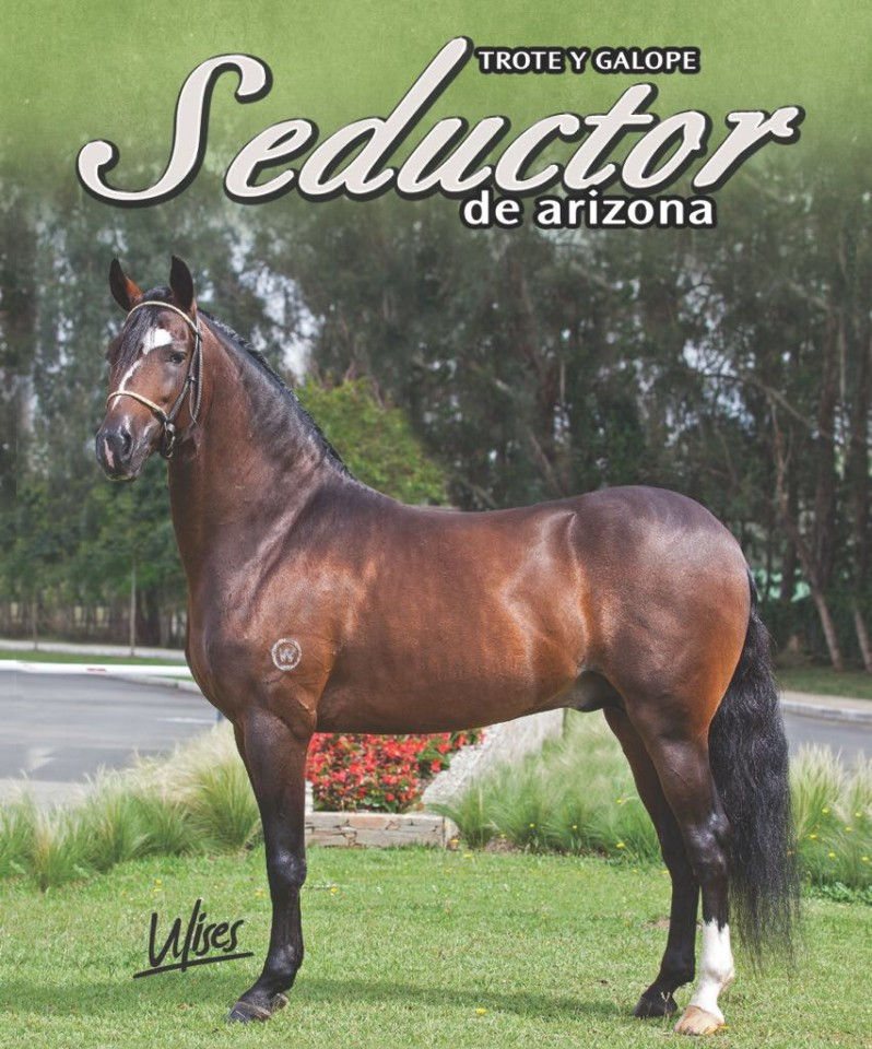 Seductor De Arizona